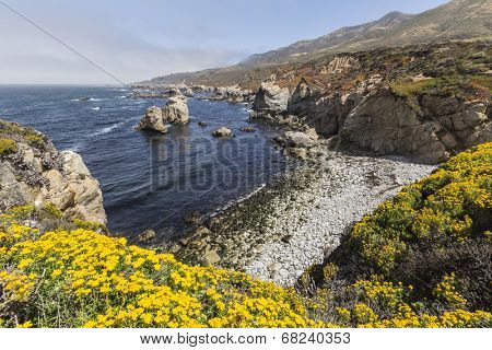 Summer blooms on central California's Big Sur coast.