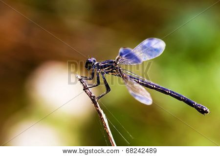 Damselfly Caught With Nice Background