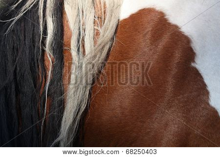 Brown And White Horse Mane Close Up