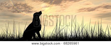 Concept or conceptual young beautiful black cute dog silhouette in grass or meadow over a sky at sun poster