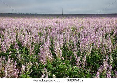 Heath Flowers Background
