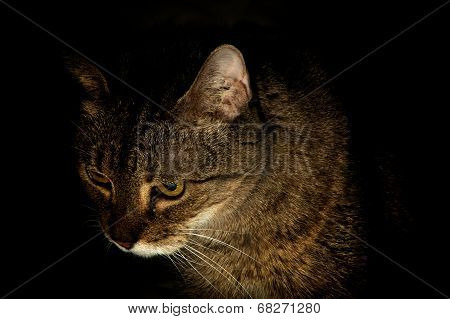 Portrait Of A Cat At Night