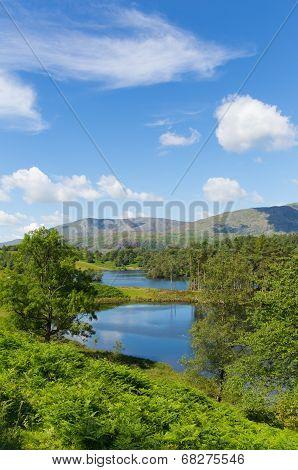 Tarn Hows near Hawkshead Lake District National Park England uk on a beautiful sunny summer day