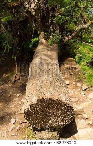 Famous coin tree at Tarn Hows Lake District National Park England uk