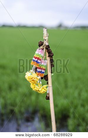 Garland And Rice Field