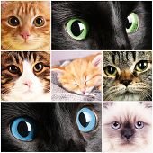 pic of puss  - Collage of different cute cats - JPG