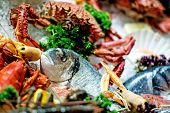 picture of saltwater fish  - Raw Fish - JPG
