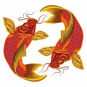 foto of koi tattoo  - Japanese carp on a white background - JPG