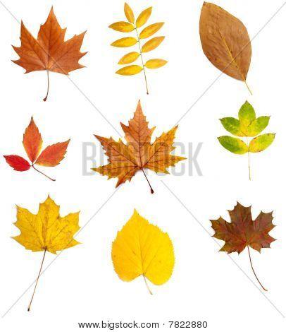 Leaf Autumn Fall Seasonal Nature