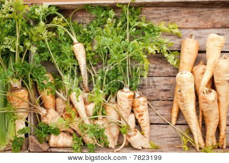 Bunches Of Fresh Carrots On Wooden Board