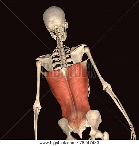 skeleton human body