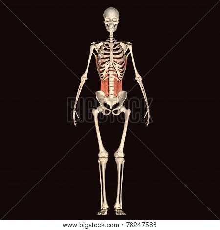 skeleton full body