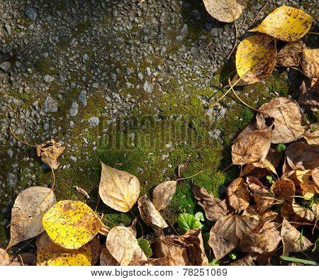 Autumn Foliage And Moss
