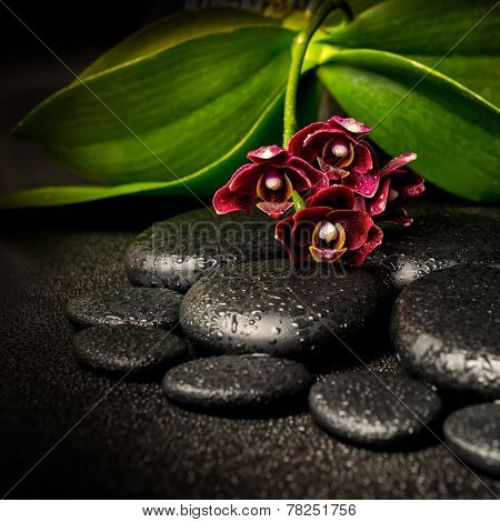 Spa Still Life Of Beautiful Deep Purple Orchid Flower, Phalaenopsis And Zen Stones With Drops On Bla