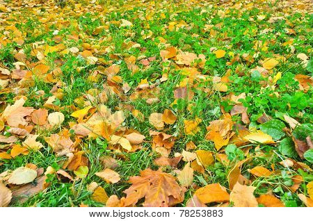 Autumn Leaves On Grass Of The Park.