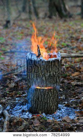 Camp fire in oak forest