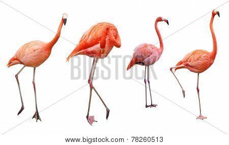 Four Flamingo