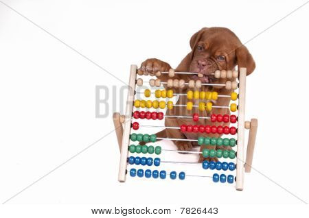 Puppy With Abacus