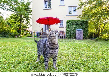 Proud Cat Watches Her Garden