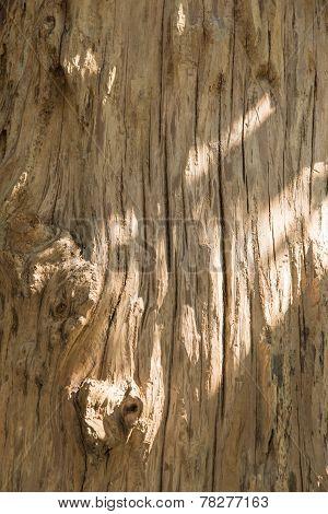 Closeup Of Tree Surface