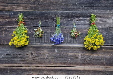 Wild Strawberry And Medical Herb Bunches On Old Wooden Wall