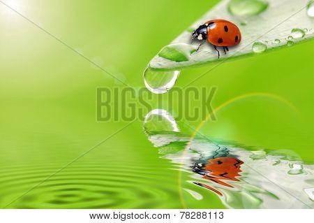 Bright Green Leaf With Ladybug