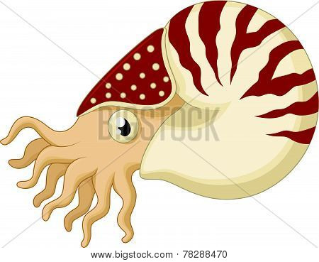 Cartoon nautilus