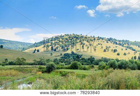 Sunny Hillside