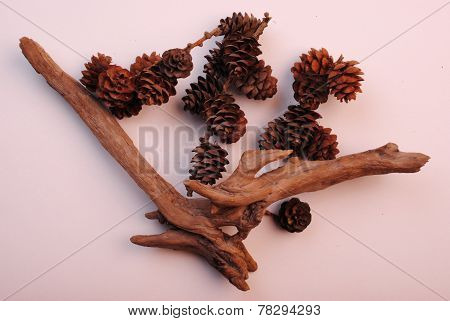 Dry Composition Snag And Larch Cones On A White Background