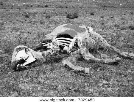 Death In The Desert