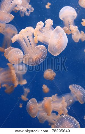 Group Jellyfish
