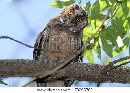 Funny Owl On Branch