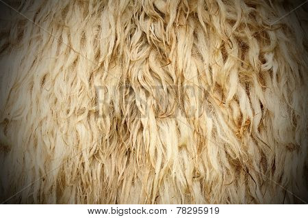 Long Sheep Fur