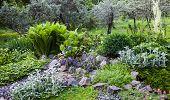 picture of vegetation  - Lush vegetation in the green rock garden - JPG