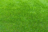 Постер, плакат: greensward football field background Green field