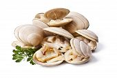 image of clam  - natural clams prepared - JPG