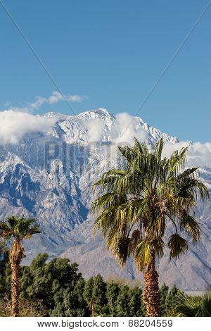 Wintering In California