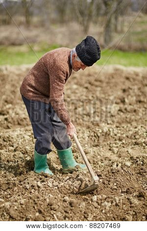 Senior Man Sowing Potatoes