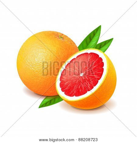 Grapefruit And Slice Isolated On White Vector