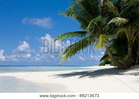 Palms on empty idyllic tropical sand beach in the indian ocean