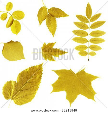 Yellow leaves collage