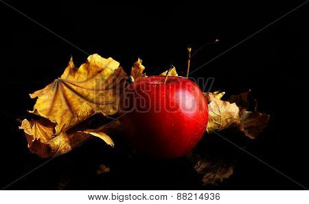 Apple with dried leaves on black background