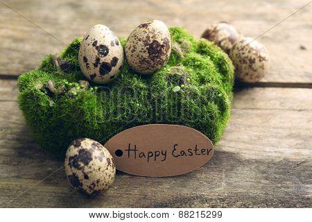 Bird eggs on moss on wooden background