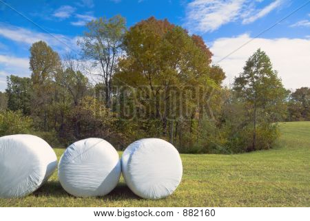 Wrapped Bales In The Fall