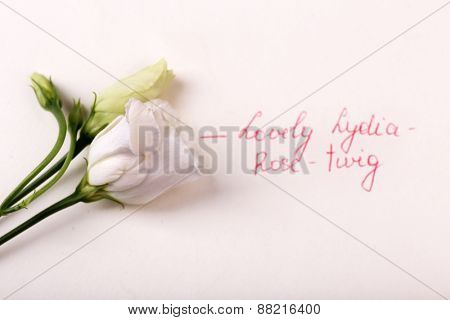 Beautiful rosy twig with inscription isolated on white