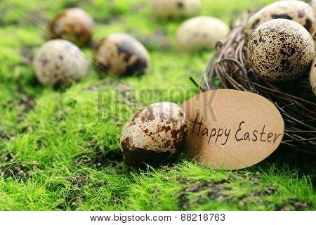 Bird eggs in nest on green grass background