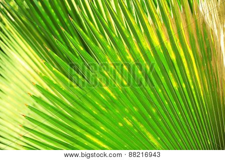 Exotic palm leaf, closeup