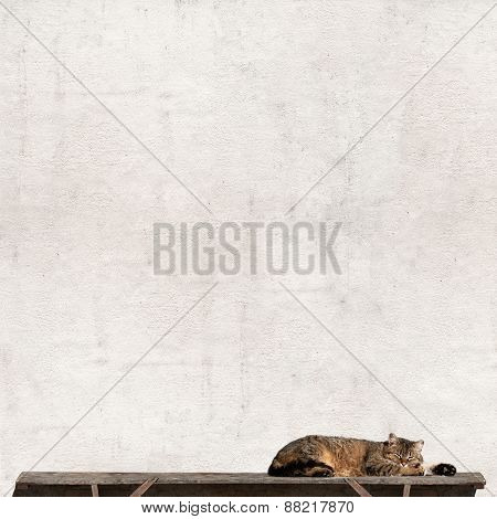 Tabby cat laying on the bench