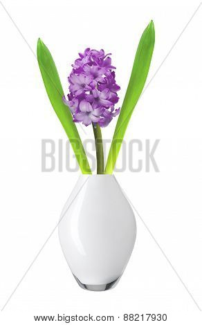Purple Hyacinth In Vase Isolated On White Background