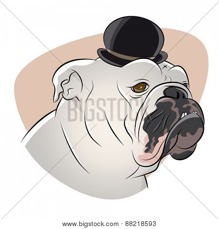 british bulldog with derby hat